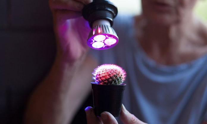 W jakich momentach oświetlenie dla roślin jest potrzebne